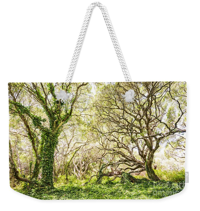 Los Osos Oak State Natural Reserve Weekender Tote Bag featuring the photograph Once Upon A Time by Jamie Pham