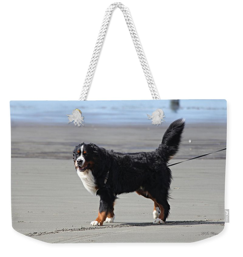 Dog Weekender Tote Bag featuring the photograph One Happy Boy by Jeanette C Landstrom