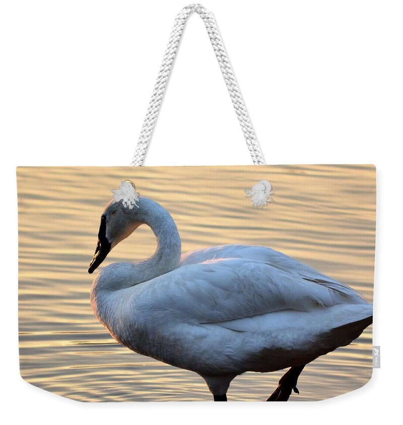 One Weekender Tote Bag featuring the photograph One Last Swim by Maria Urso