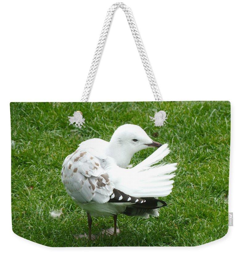 Seagull Weekender Tote Bag featuring the photograph One Less To Worry About by Steve Taylor