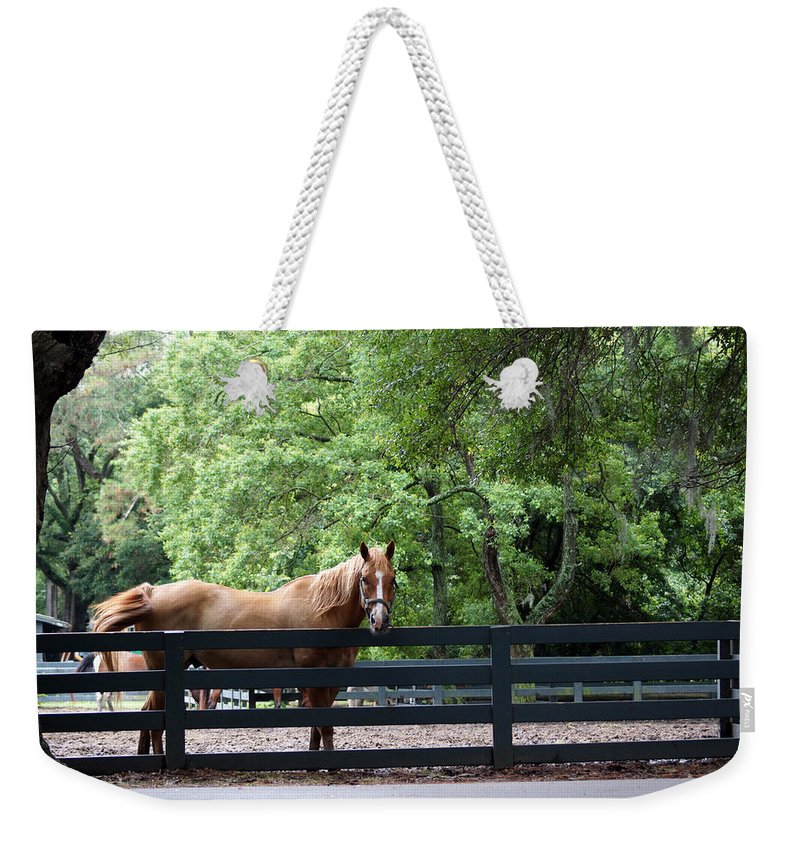 Helton Head Island Horses Weekender Tote Bag featuring the photograph One Very Pretty Hilton Head Island Horse by Kim Pate