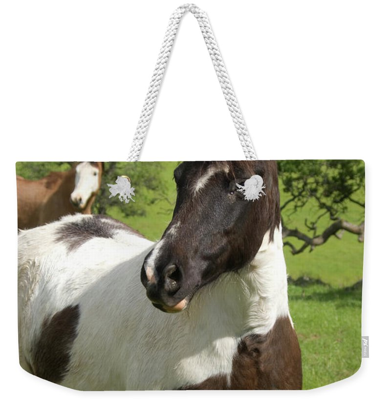Horse Weekender Tote Bag featuring the photograph Onlookers by Jim And Emily Bush