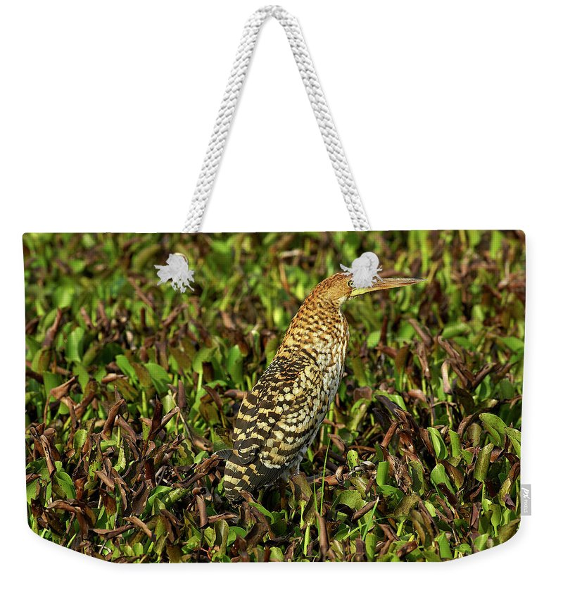 Adult Weekender Tote Bag featuring the photograph Onore Fascie Tigrisoma Fasciatum by Gerard Lacz