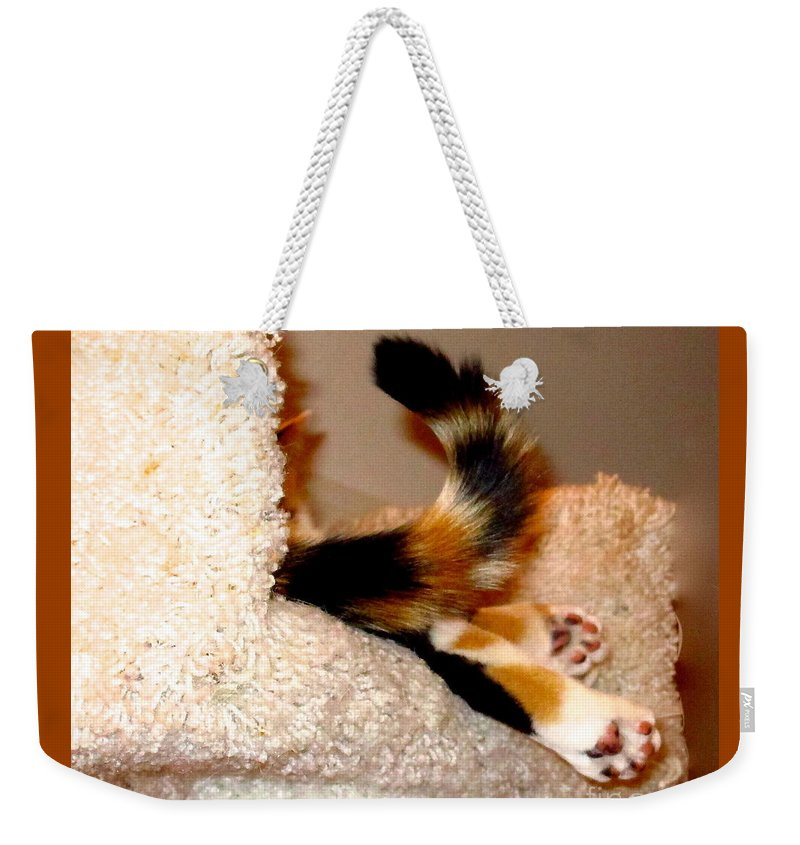 Cat Tail Weekender Tote Bag featuring the photograph Oops Where Is The Cat by Phyllis Kaltenbach