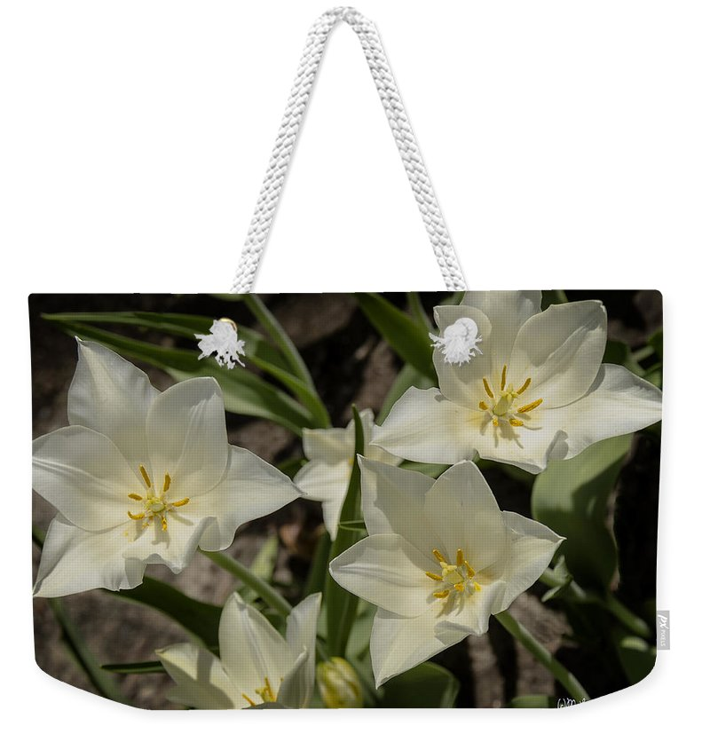 Usa Weekender Tote Bag featuring the photograph Open Tulip Time by LeeAnn McLaneGoetz McLaneGoetzStudioLLCcom