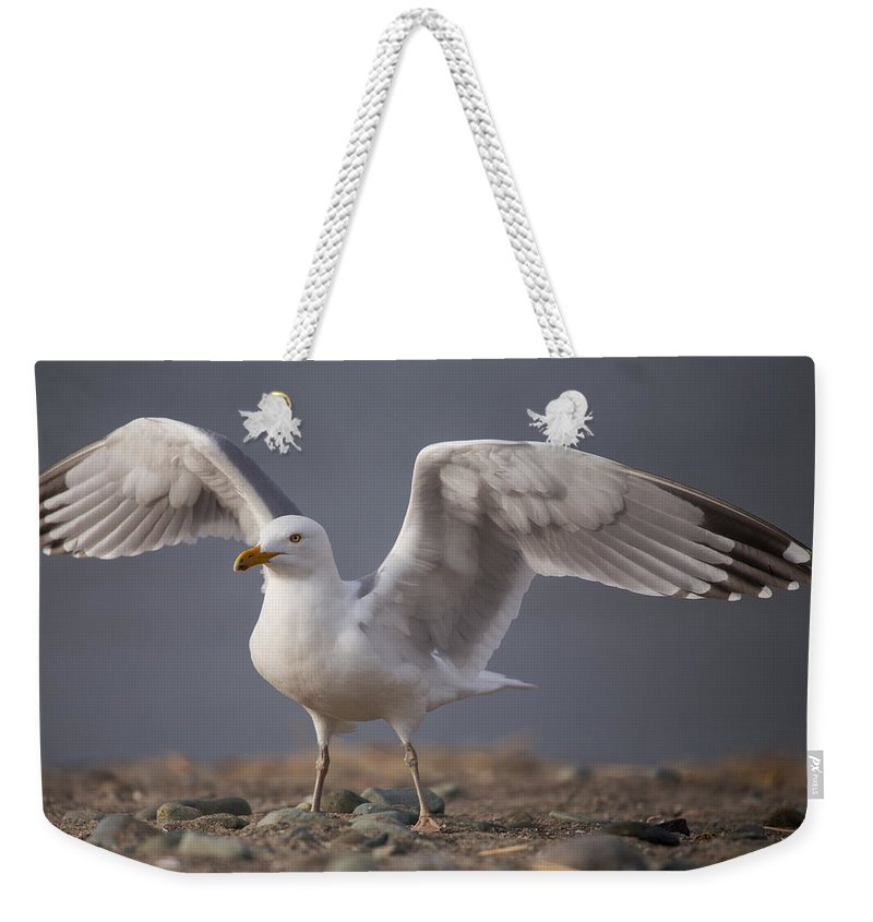 Open Wings Weekender Tote Bag featuring the photograph Open Wings by Karol Livote