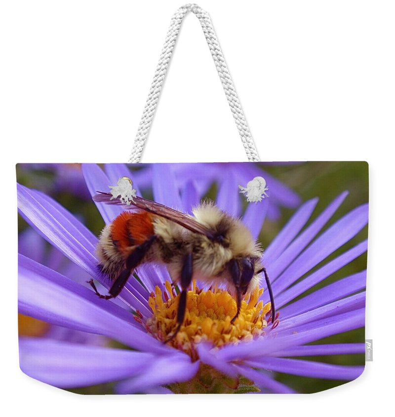 Bees Weekender Tote Bag featuring the photograph Orange-banded Bee by Rona Black