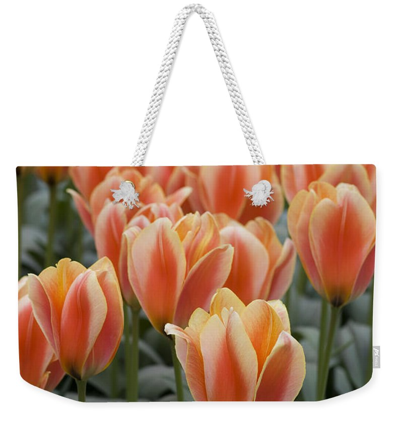 Bloom Weekender Tote Bag featuring the photograph Orange Dutch Tulips by Juli Scalzi