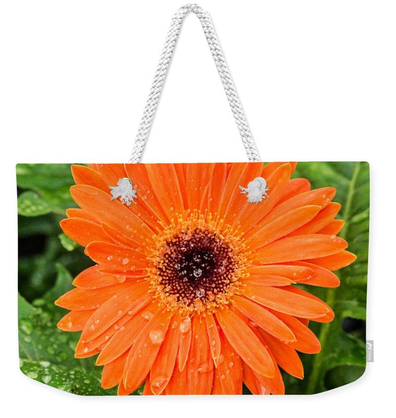 Gerber Daisy Weekender Tote Bag featuring the photograph Orange Gerber Daisy 2 by Douglas Barnett