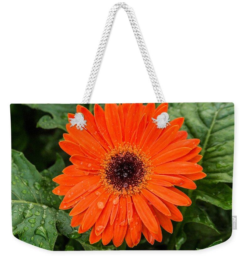 Gerber Daisy Weekender Tote Bag featuring the photograph Orange Gerber Daisy 3 by Douglas Barnett
