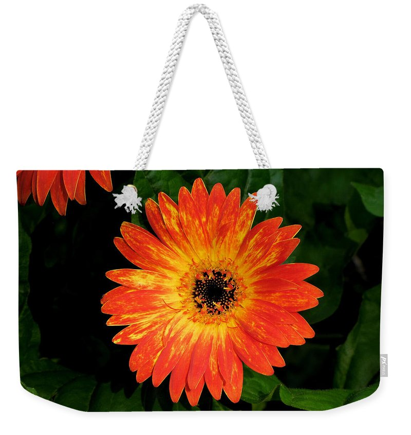 Orange Weekender Tote Bag featuring the photograph Orange Gerbera Daisy II by C H Apperson