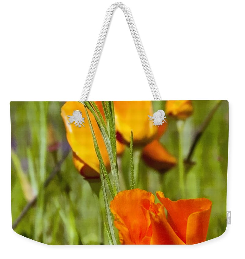 Oregon Poppy Wild Poppies Flower Flowers Wildflower Wildflowers Plant Plants Spring Weekender Tote Bag featuring the photograph Orange Poppy by Bob Phillips