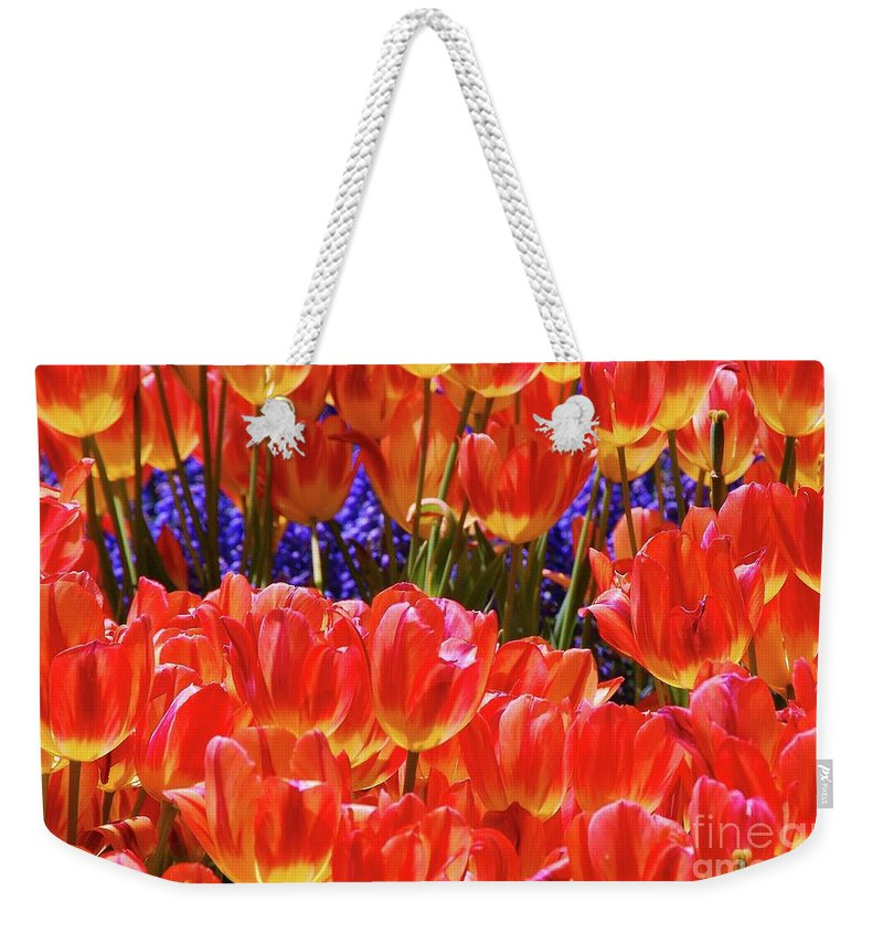 Orange Tulips Weekender Tote Bag featuring the photograph Orange Tulips by Allen Beatty