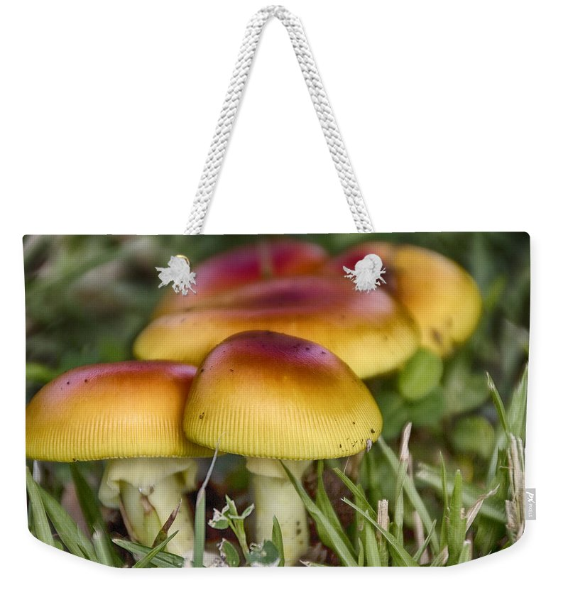 Orange Weekender Tote Bag featuring the photograph Orange V5 by Douglas Barnard