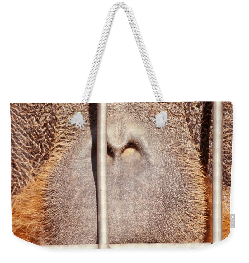 Adult Weekender Tote Bag featuring the photograph Orangutan Face Watching From Behind Steel Bars by Stephan Pietzko