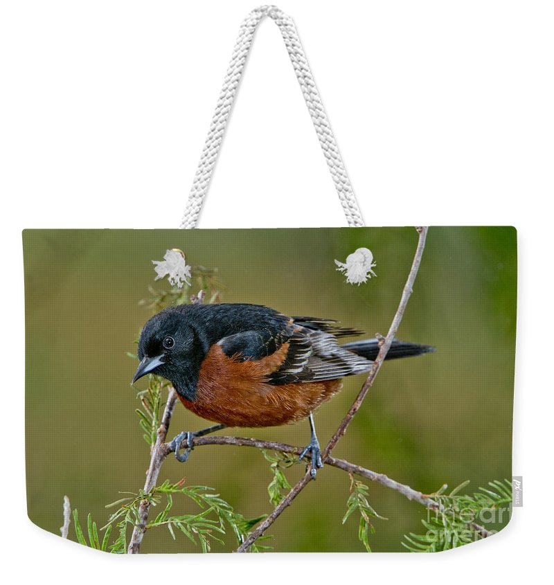 Orchard Oriole Weekender Tote Bag featuring the photograph Orchard Oriole by Anthony Mercieca