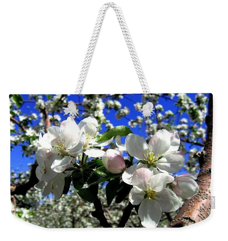 Apple Blossoms Weekender Tote Bag featuring the photograph Orchard Ovation by Will Borden