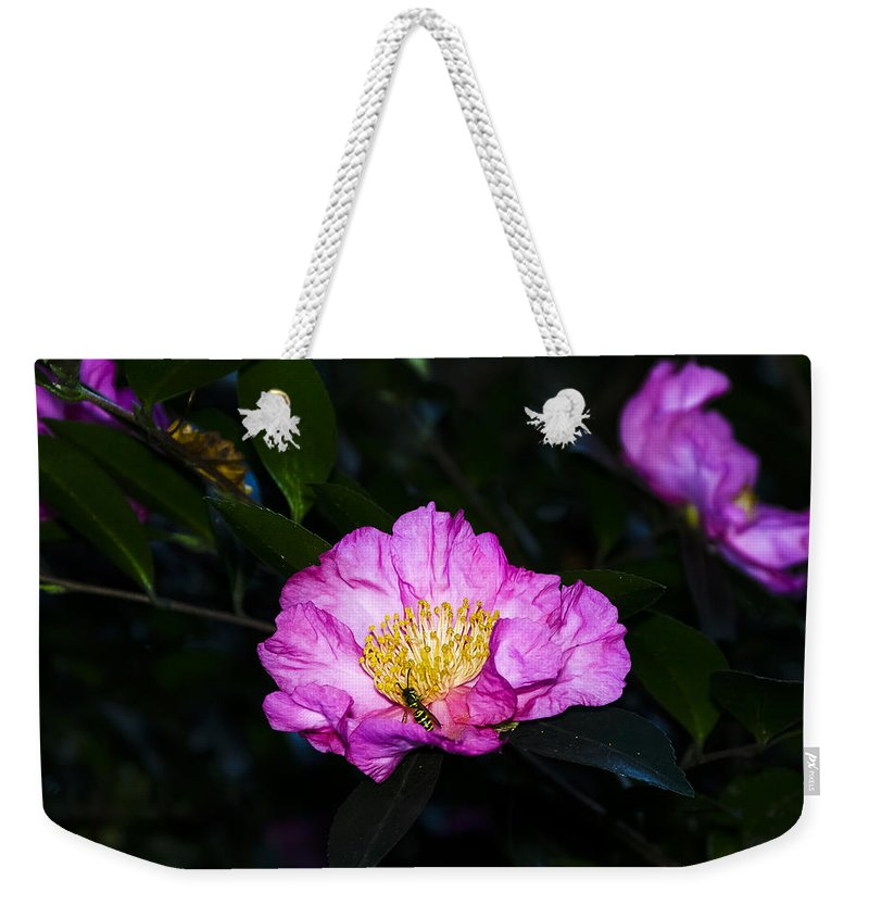 North Carolina Weekender Tote Bag featuring the photograph Orchid Camellia Pink - Camellia Sasanqua by Greg Reed