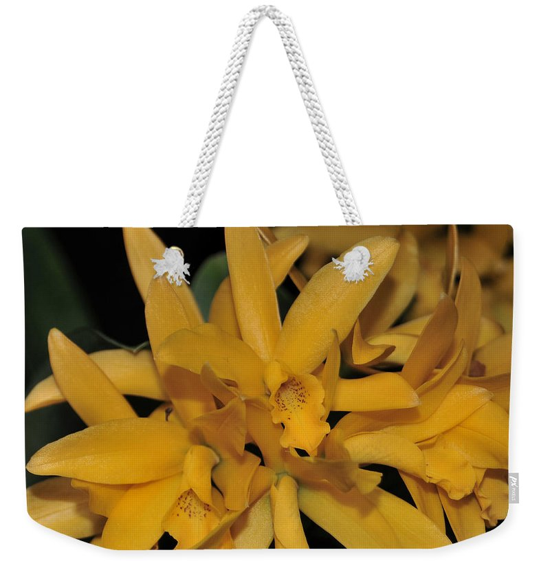 Yellow Cattleya Weekender Tote Bag featuring the photograph Orchid Cattleya Golden Sparkle 231 by Terri Winkler