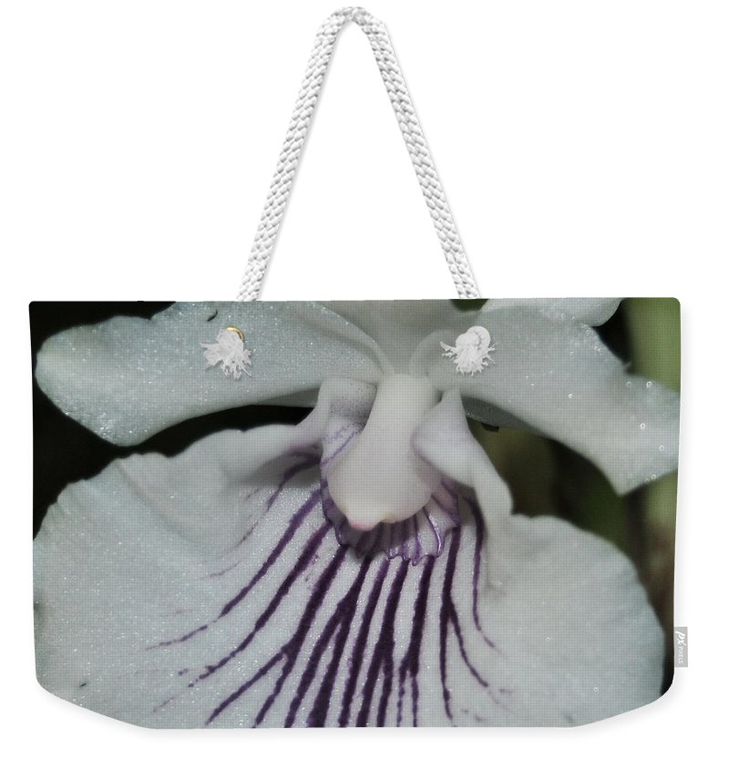 White Orchid Weekender Tote Bag featuring the photograph Orchid Cochleanthes Aromatica Menehune by Terri Winkler