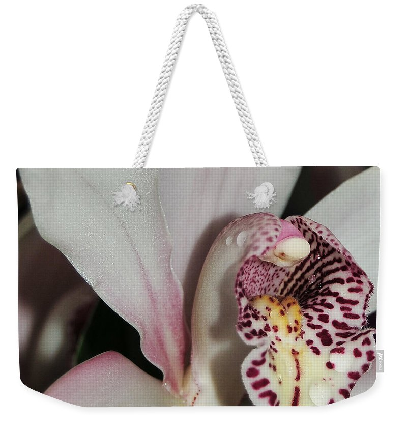 White And Pink Cymbidium Weekender Tote Bag featuring the photograph Orchid Cymbidium Bethlehem Starlight Macro by Terri Winkler