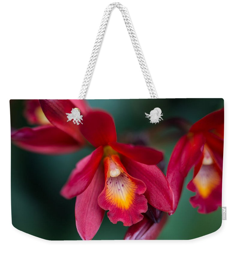 Orchid Love Weekender Tote Bag featuring the photograph Orchid Love by Dale Kincaid