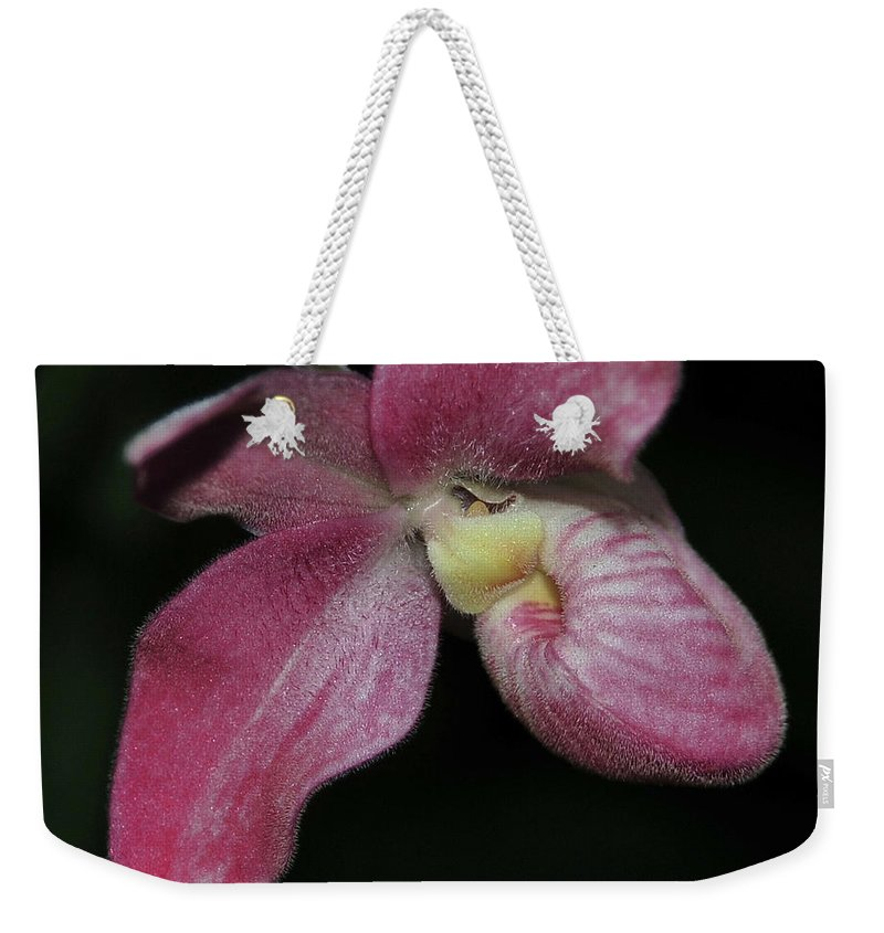 Orchid Weekender Tote Bag featuring the photograph Orchid Phragmipedium Hanna Popow 2 Of 2 by Terri Winkler