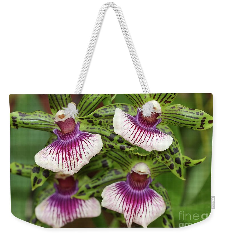Orchids Weekender Tote Bag featuring the photograph Orchids Four by Deborah Benoit