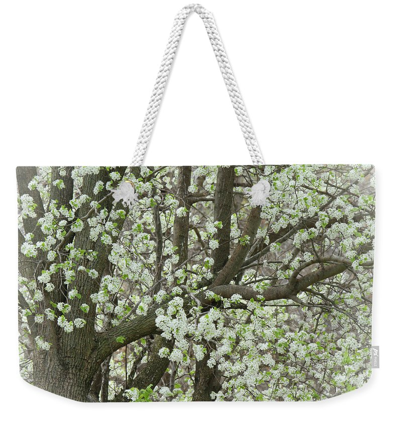 Pear Tree Weekender Tote Bag featuring the photograph Oriental Pear Tree by Bonnie Willis