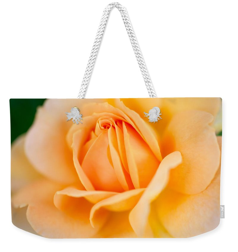 Rose Weekender Tote Bag featuring the photograph Original Shades And Shadows by Teri Schuster