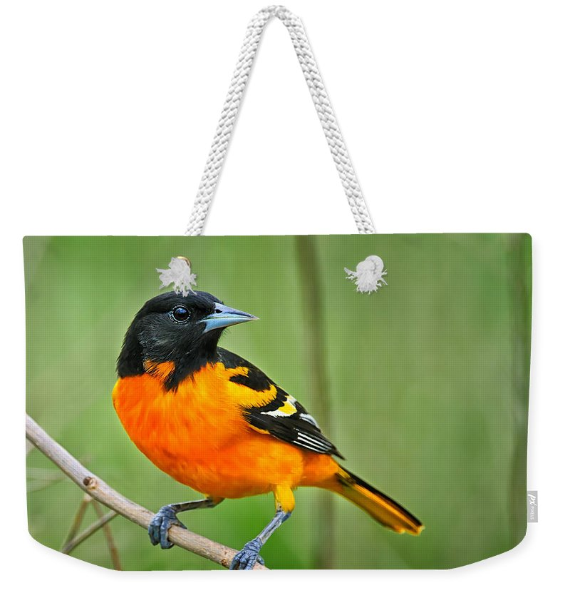 Oriole Weekender Tote Bag featuring the photograph Oriole Perched by Timothy Flanigan