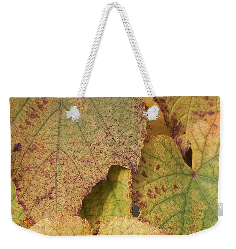 Coin Weekender Tote Bag featuring the photograph Ornamental Vine by Kim Haddon Photography