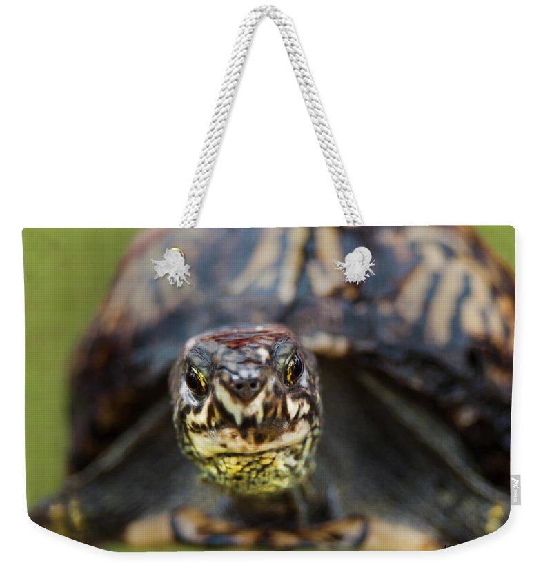 Ornate Box Turtle Weekender Tote Bag featuring the photograph Box Turtle Close-up by Mechala Matthews