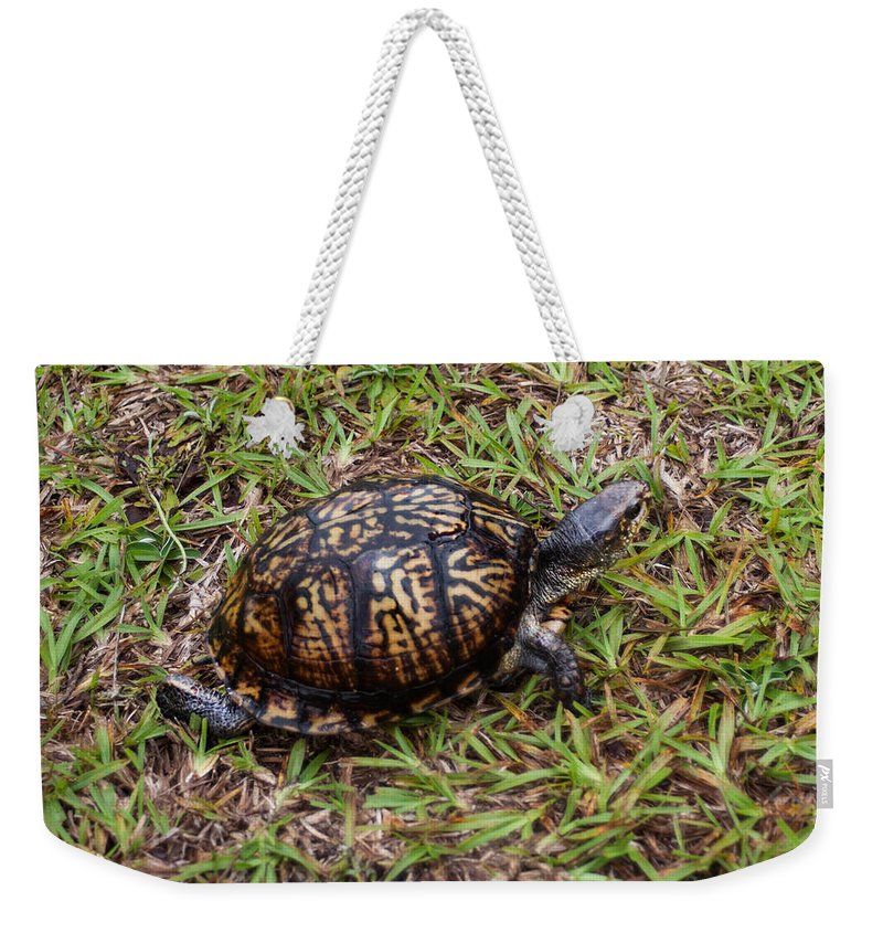 Ornate Box Turtle Weekender Tote Bag featuring the photograph Box Turtle by Mechala Matthews