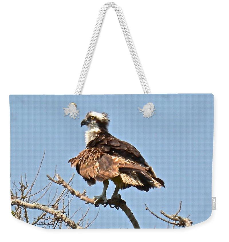 Bird Weekender Tote Bag featuring the photograph Osprey by Carol Bradley