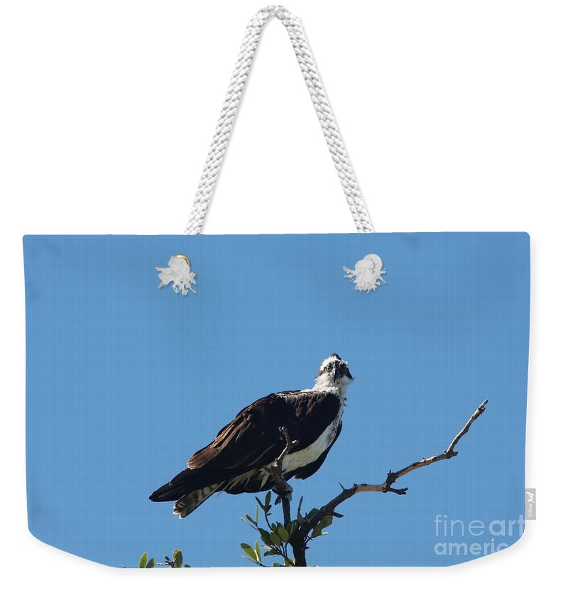 Osprey Weekender Tote Bag featuring the photograph Osprey In A Tree by Christiane Schulze Art And Photography