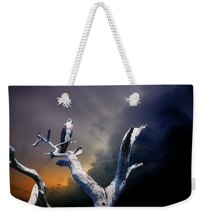 Osprey Weekender Tote Bag featuring the photograph Osprey by Mal Bray