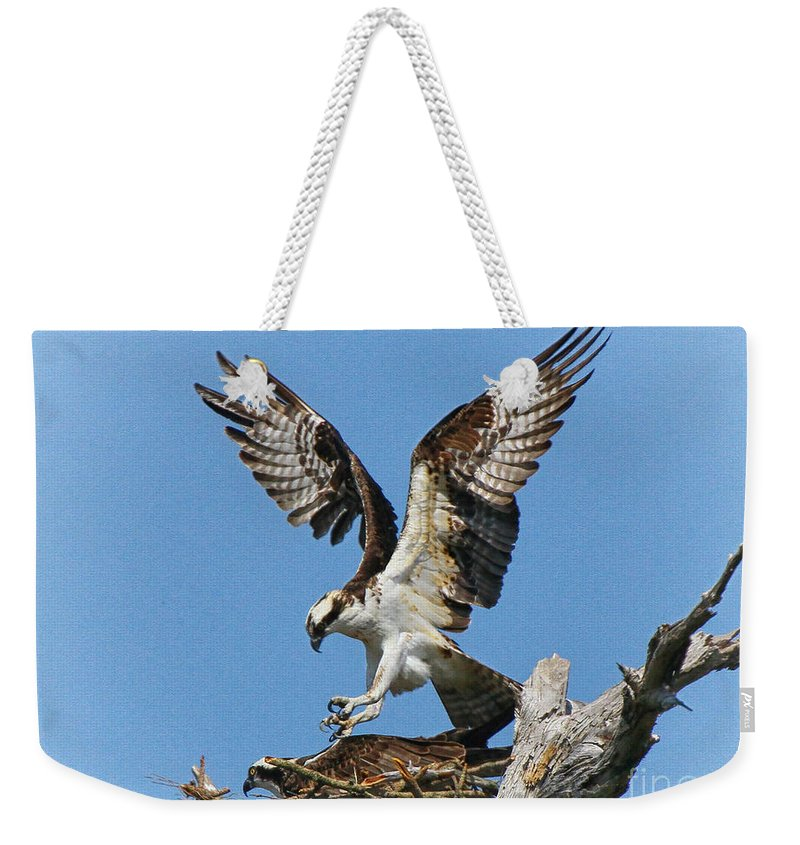 Opsrey Weekender Tote Bag featuring the photograph Osprey Mating by Barbara Bowen