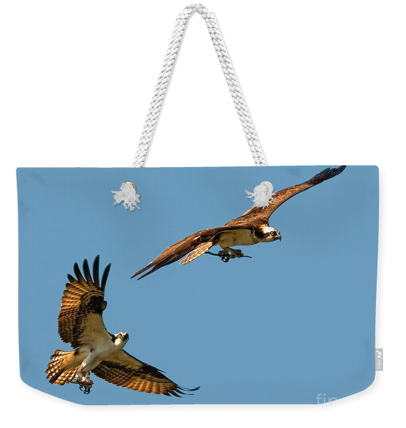Osprey Weekender Tote Bag featuring the photograph Osprey Pair by Timothy Flanigan