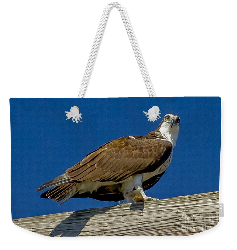 Osprey Weekender Tote Bag featuring the photograph Osprey With Fish In Talons by Dale Powell