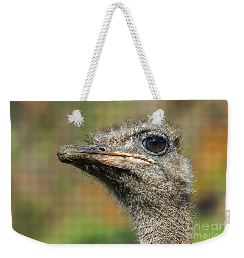 Common Ostrich Weekender Tote Bag featuring the photograph Ostrich 4 by Arterra Picture Library