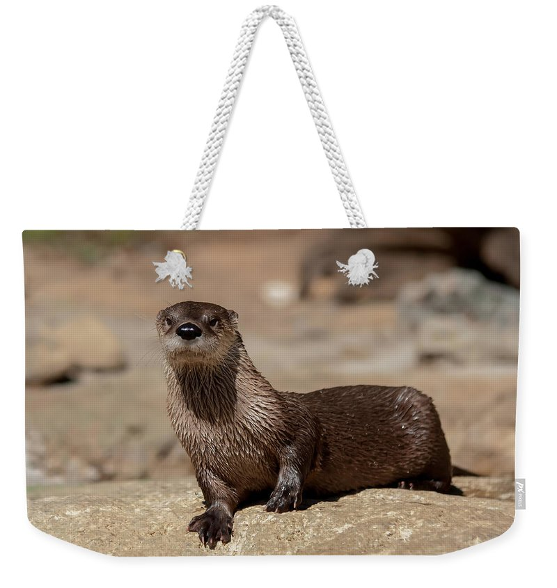 Mammal Weekender Tote Bag featuring the photograph Otter by Alex Grichenko