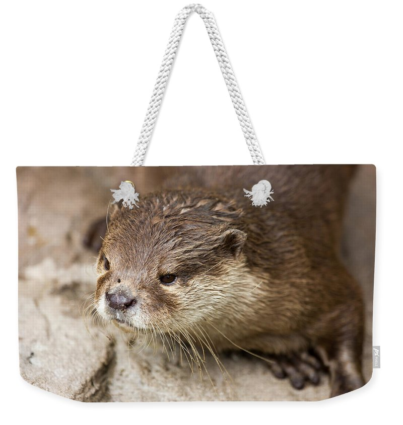 Closeup Weekender Tote Bag featuring the photograph Otter Closeup by Pati Photography
