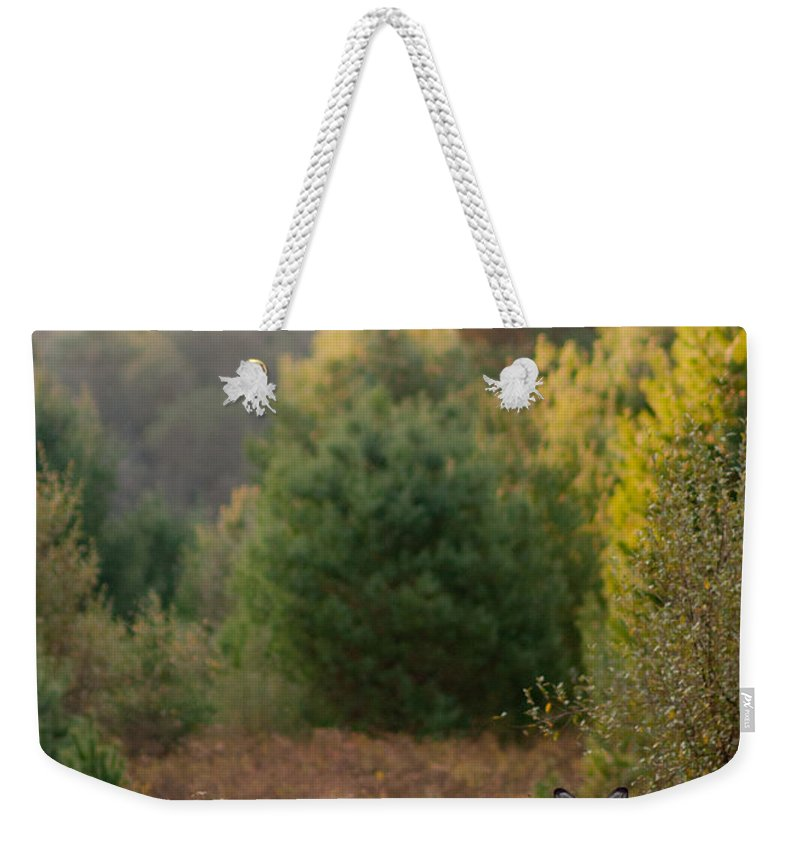 Weekender Tote Bag featuring the photograph Our Pet by Scott Hafer
