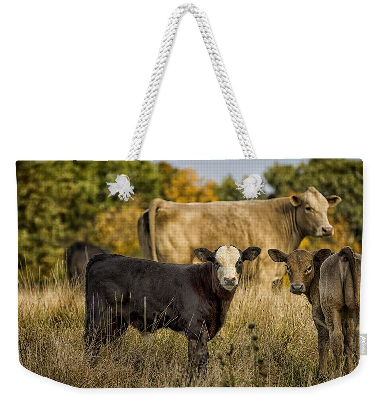 Cow Weekender Tote Bag featuring the photograph Out For A Graze by Linda Tiepelman