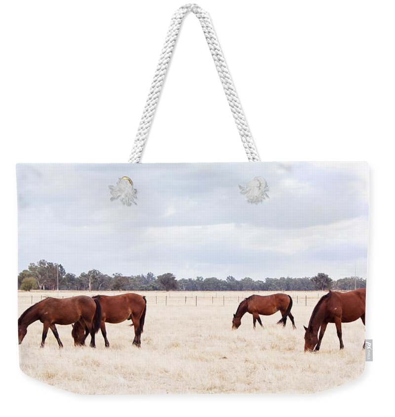 Horse Weekender Tote Bag featuring the photograph Over The Fence by Linda Lees