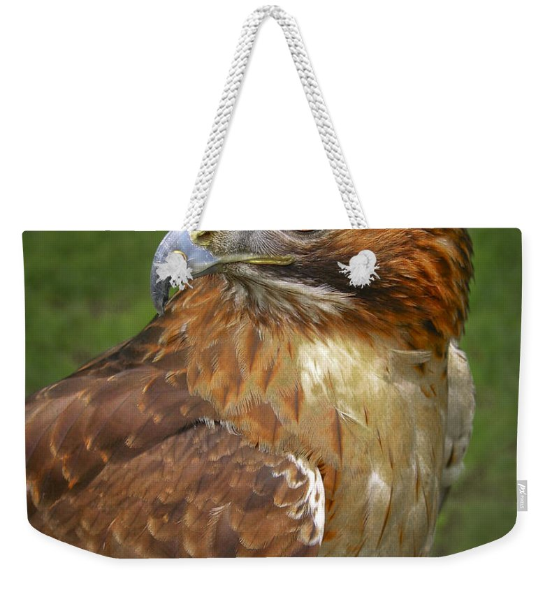 Animals Weekender Tote Bag featuring the photograph Over The Shoulder by David and Carol Kelly