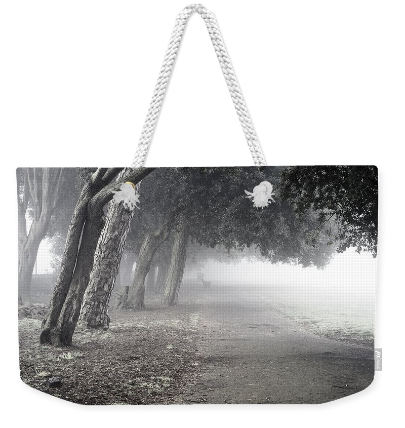 Uk Weekender Tote Bag featuring the photograph Overhanging Trees by Christopher Rees