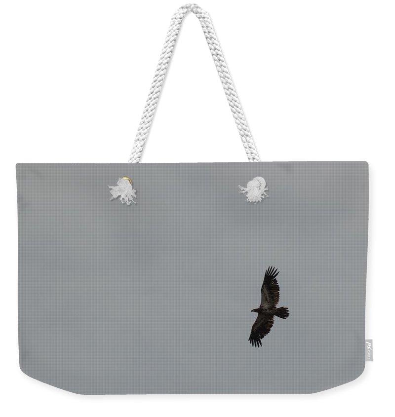 Bird Weekender Tote Bag featuring the photograph Overhead by Linda Kerkau