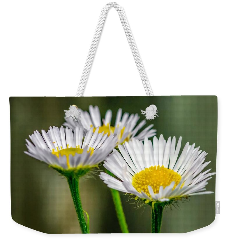 Macro Weekender Tote Bag featuring the photograph Oxeye Daisy by Steve Harrington